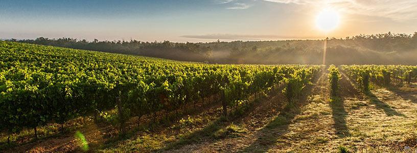 vignes-france