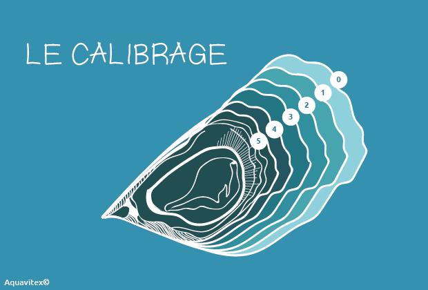 calibrage-octreiculture-metier-conchyliculture-aquavitex