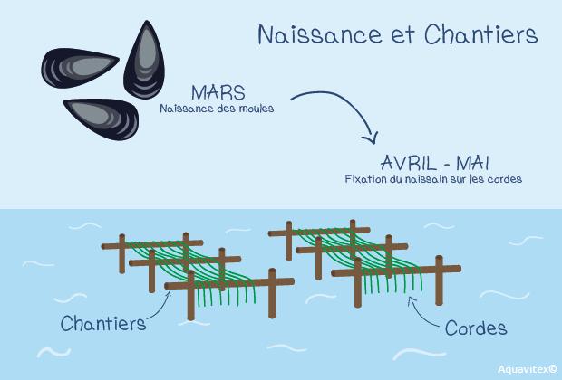 elevage-moules-mytliculture-aquavitex
