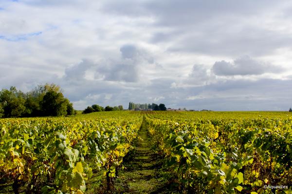 vin-de-loire-domaine-viticole